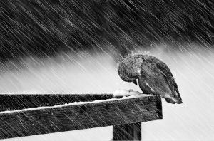 foto-in-bianco-e-nero-16